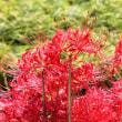 紅い秋‥③ 【ひで某】