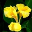 花の移ろい 先人の句