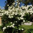 ローマ3日目:ローマ植物園