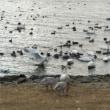稚内市大沼野鳥観察館