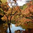 千葉市民の紅葉は泉自然公園でH17.11.04