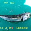 笑転爺の釣行記 6月8日☀ 久里浜港岸壁