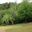 北川村 モネの庭 マルモッタンは人気ガーデンのようです。