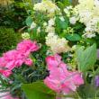 423  元気がでるのはお喋りと自然の花達なのです!
