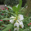 花壇の花も見てください~京都府立植物園(9)