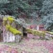 Gifu / Gifu Gokoku Shrine