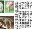 樊噲の「犬殺し」という職業は、飼い主が自分で殺せない「犬の性質」によって必要だったと思う