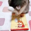 猫ミロくん。お土産が気になる!