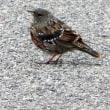 滅多と撮らない鳥