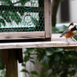 久しぶりの庭鳥