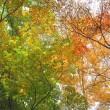 10/20(金)のイキメンニュース~少子化・子育て・教育の情報