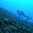 3日目1本目「ハワイ島・Naia Bay」での47分