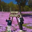 チューリップ&芝桜の巻