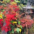 雨上がりの花と色づき始めた紅葉がきれいでした🌺