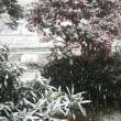 雪がドンドン降ってきました☆