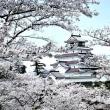 会津への旅 下 鶴ヶ城の桜 高校3年時授業の場所だった思い出の城内で幻想的な夜桜に出会った