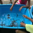 浜名湖体験学習施設ウォット。~夏休みにキャンプ場で移動水族館あるよ~