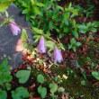 7月14日の花