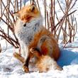 冬期の写真ー33