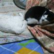 わが家の猫フェス🐈