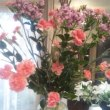シャンソン歌手リリ・レイLILI LEY  月曜日のシャンソン稽古場の花達