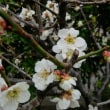 桜も咲いた