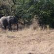 チョベ国立公園 ゲームドライブ後半 ボツワナ