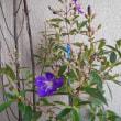 触れると、もろい紫の綺麗な花♪