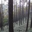 観音岳へ ~ 夜叉神の森から