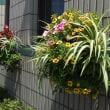 パークブリッジの花壇を夏の花にしました^^
