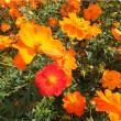 秋の色~季節の花~幸せを感じて.🌸