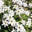春の景色で癒されよう・・・。