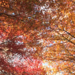 🚶…宇治橋…宇治左岸…天ヶ瀬ダム…森林公園…宇治左岸…'171124
