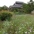 庭の様子②