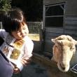 羊となおと