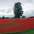 雨上がりの花の丘