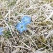春の植物18