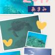 遅めの夏休み!!奄美大島!