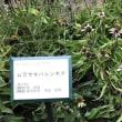 植物園へ   =昭和薬科大学=