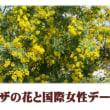 ミモザの花と国際女性デー