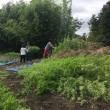 天の川プロジェクト 2017 竹の切り出し