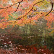 ゆり太・リマの紅葉狩り~(^^♪