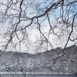 今日の大沼(11月17日)曇り