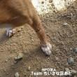 この子たちを助けたい!多頭飼育の犬たち…コテツくん