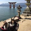 ちょっと遅め夏休み⑤ 岩国・宮島