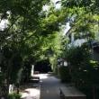 長野 善光寺界隈の心地良い木陰