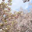 京都一乗寺