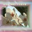 『 和気藹々肌恋しさの花の宵 』物真似575春zqx1305