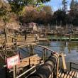 清水公園フィールドアスレチック