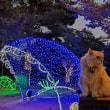 光のおもてなしin松山城2018 No1